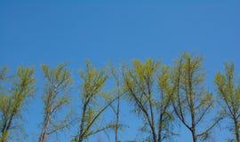 Árboles con follaje del verde amarillo y el cielo azul Fotografía de archivo