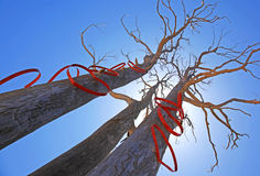 Árboles con formas del corazón en el sol Imagenes de archivo