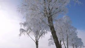 Árboles con Frost blanco como la nieve y que brilla en ramas en invierno después de nevadas metrajes