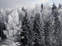 Árboles con helada de la escarcha Imagenes de archivo