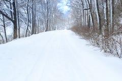 Árboles con invierno del fondo de la nieve Imagenes de archivo