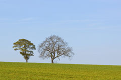 Árboles con la hierba y el cielo azul Fotos de archivo libres de regalías