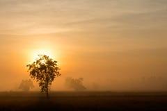 Árboles con la niebla de la mañana fotografía de archivo libre de regalías