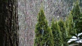 Árboles con la nieve que cae suavemente en día de invierno metrajes