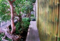 Árboles con la pared de bambú en estilo asiático Foto de archivo