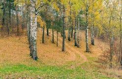Árboles con las hojas amarillas Imagen de archivo libre de regalías