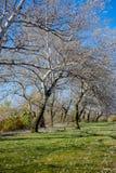Árboles con las hojas blancas Imágenes de archivo libres de regalías