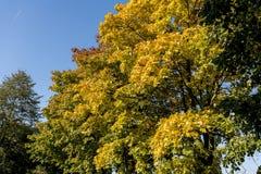 Árboles con las hojas coloridas en el camino Imagenes de archivo