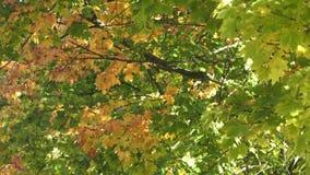 Árboles con las hojas del color almacen de metraje de vídeo
