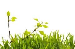 Árboles con las hojas jovenes Foto de archivo