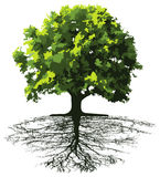 Árboles con las raíces stock de ilustración
