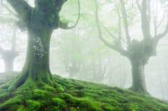 Árboles con las raíces y el musgo del verde vivo Fotografía de archivo