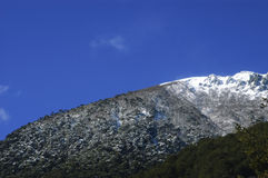 Árboles con nieve Imagenes de archivo