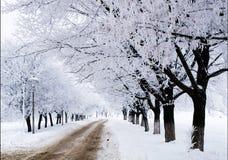 Árboles con nieve Fotografía de archivo