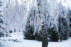 Árboles con nieve en parque del invierno Fotos de archivo libres de regalías