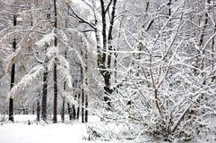 Árboles con nieve en parque del invierno Fotos de archivo