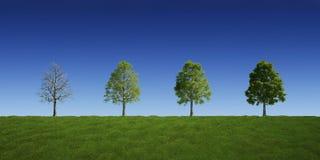 Árboles con y sin las hojas libre illustration