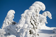 Árboles congelados Fotografía de archivo libre de regalías
