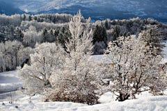 Árboles congelados Imagen de archivo libre de regalías
