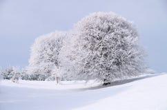 Árboles congelados Foto de archivo