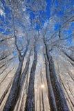 Árboles congelados Imagenes de archivo