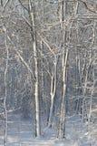 Árboles congelados Imagen de archivo