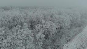 Árboles congelados de la cantidad aérea del abejón en hielo en la niebla 4k del invierno almacen de metraje de vídeo