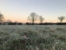 Árboles congelados del paisaje del país Imagenes de archivo