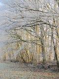 Árboles congelados en la luz del sol Fotos de archivo