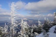 Árboles congelados en las montañas fotos de archivo libres de regalías