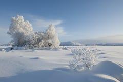 Árboles congelados, montaje negro Foto de archivo libre de regalías