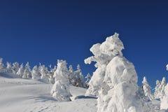Árboles congelados sobre las montañas de la montaña en Japón del norte fotografía de archivo