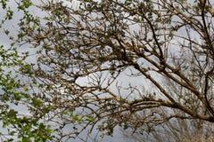 Árboles contra el cielo Fotos de archivo libres de regalías