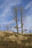 Árboles contra el cielo Imágenes de archivo libres de regalías