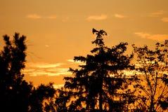 Árboles contra una puesta del sol de oro Imágenes de archivo libres de regalías