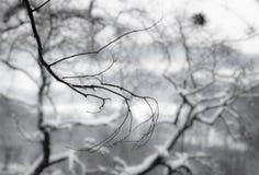 Árboles coronados de nieve de la estación del invierno en Francia meridional en costa atlántica Fotos de archivo