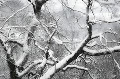 Árboles coronados de nieve de la estación del invierno en Francia meridional en costa atlántica Fotos de archivo libres de regalías