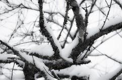 Árboles coronados de nieve de la estación del invierno en Francia meridional en costa atlántica Foto de archivo