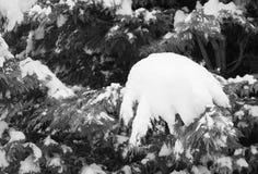 Árboles coronados de nieve de la estación del invierno en Francia meridional en costa atlántica Imágenes de archivo libres de regalías