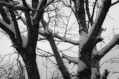 Árboles coronados de nieve de la estación del invierno en Francia meridional en costa atlántica Imagen de archivo libre de regalías