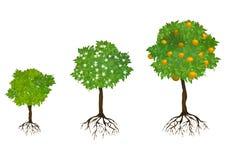 Árboles crecientes con las raíces ilustración del vector