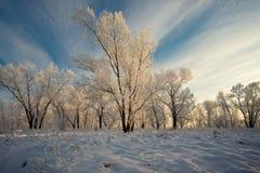 Árboles cubiertos con la helada blanca Fotos de archivo libres de regalías