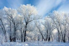 Árboles cubiertos con la helada blanca Fotografía de archivo libre de regalías