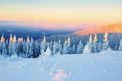 Árboles cubiertos con los copos de nieve Foto de archivo libre de regalías