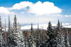 Árboles cubiertos con nieve fotografía de archivo