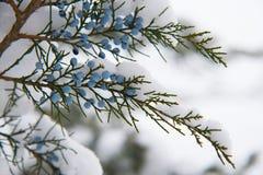 Árboles cubiertos con nieve Fotos de archivo