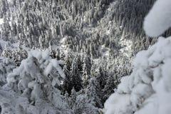 Árboles cubiertos con nieve imagen de archivo