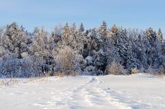 Árboles cubiertos con nieve en bosque del invierno Foto de archivo libre de regalías