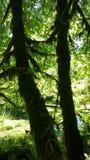 Árboles cubiertos de musgo Fotografía de archivo