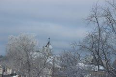 Árboles cubiertos en hielo en un día nevoso en Canadá Fotografía de archivo